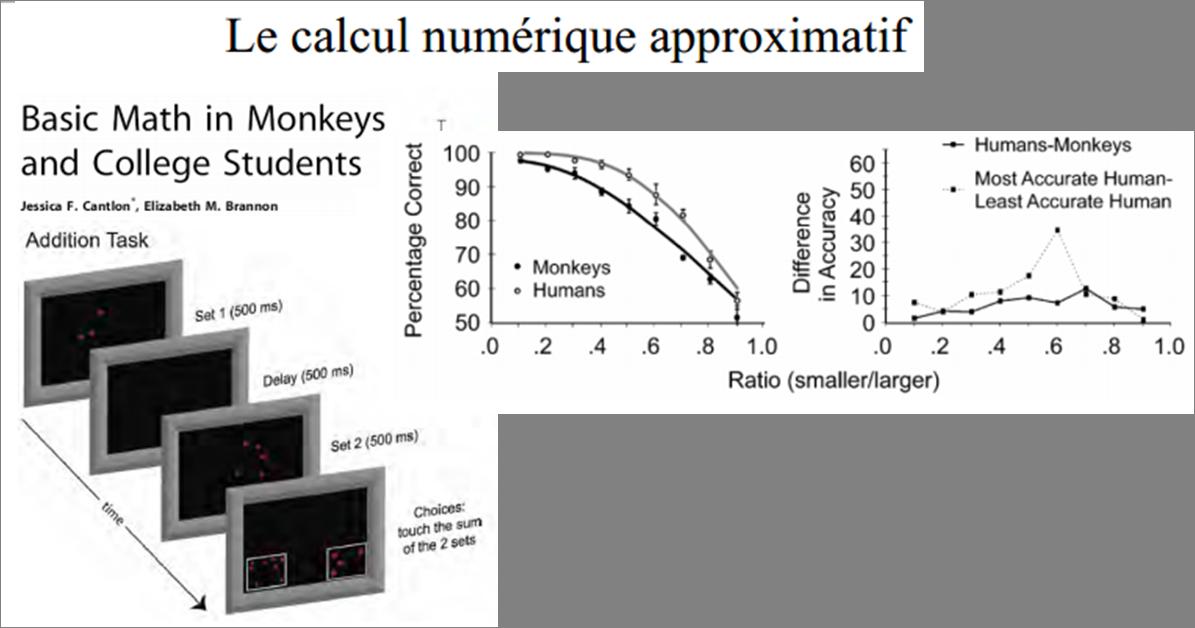 Additions monkeys
