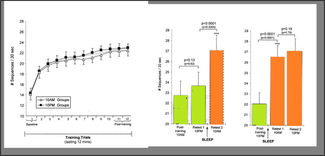 Lors d'un apprentissage moteur, les performances plafonnent (à gauche). Mais elles s'améliorent après une nuit de sommeil (à droite colonnes oranges) beaucoup plus que si l'on ne dort pas -colonne verte, graphe du milieu. (Source: Walker 2002)