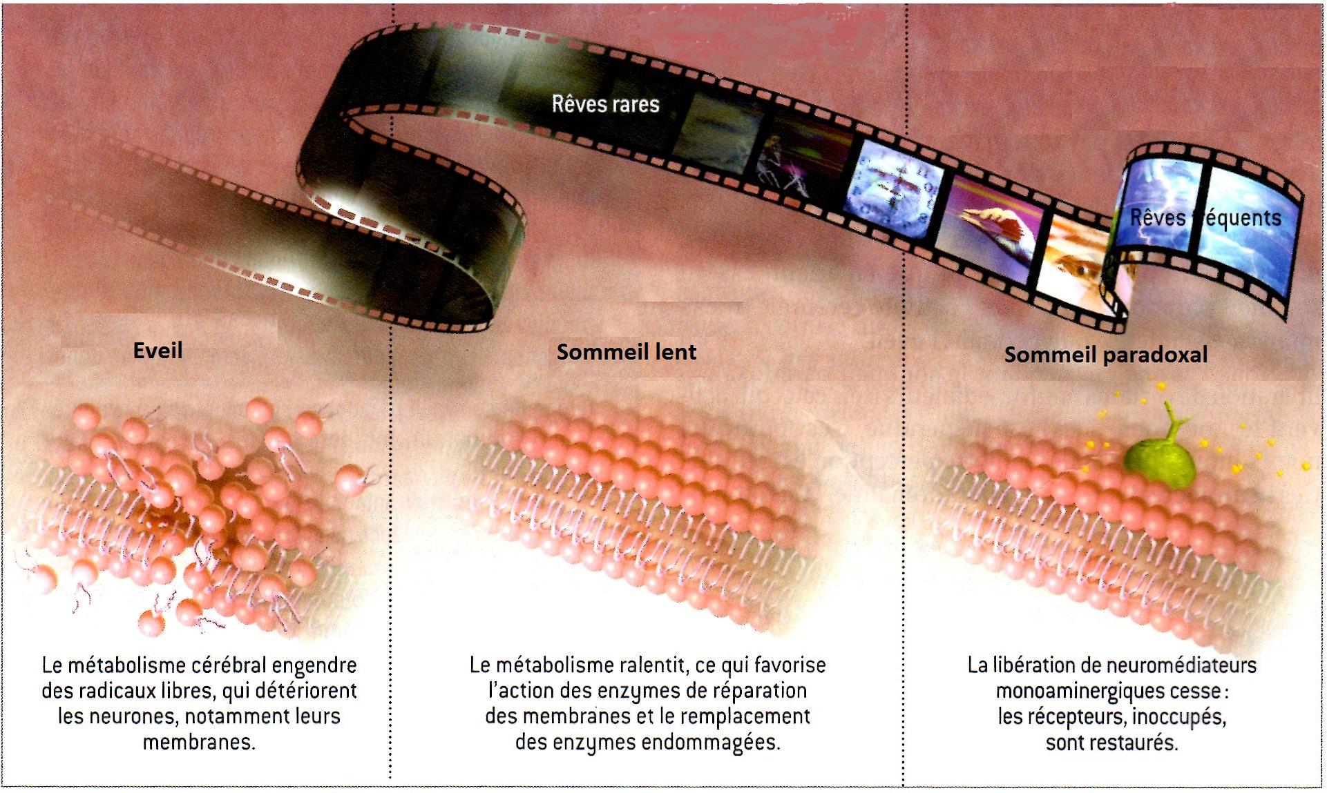Illustration de Pour la Science (janv 2014)