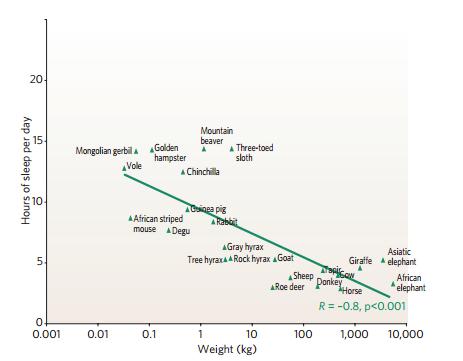 Plus un herbivore est gros, moins il a besoin de sommeil (source: Siegel 2005)